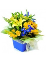 C6.2 Boxed Arrangement