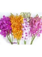 Orchids 20 Stalks