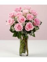 24 Carnation in vase
