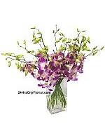 Orchids Purple