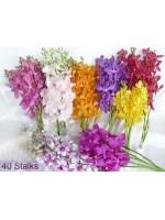 Orchids 40 Stalks