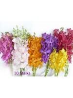 Orchids 30 Stalks
