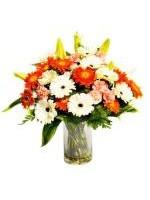 Aurum Blooms- Australia